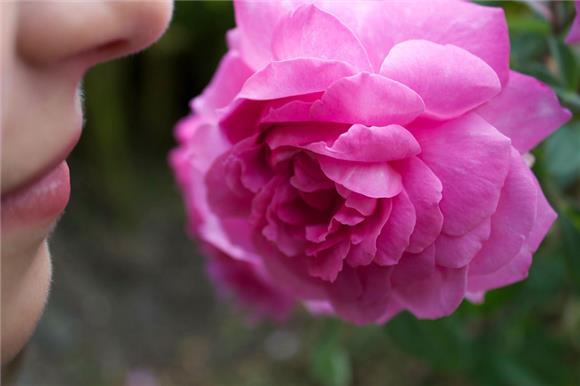 Британские ученые назвали потерю обоняния ивкуса главным симптомом COVID-19