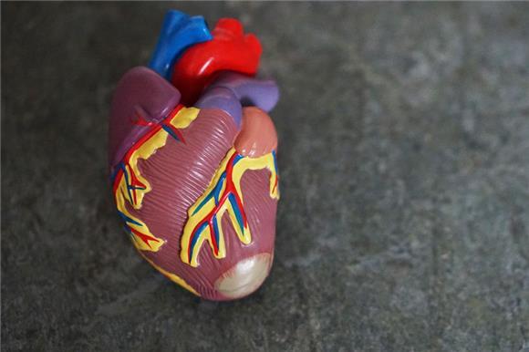 ВИндии уже больше года непроводят трансплантации сердца детям изРоссии
